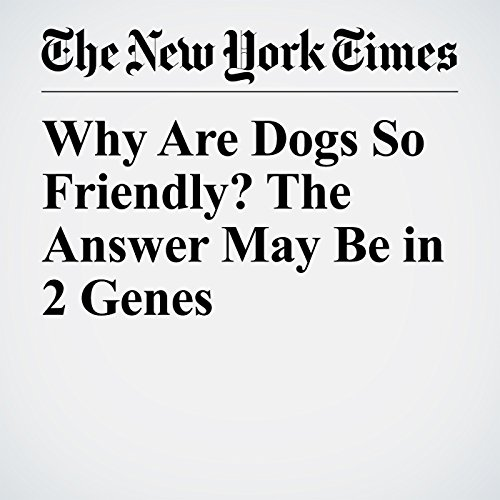 Why Are Dogs So Friendly? The Answer May Be in 2 Genes audiobook cover art