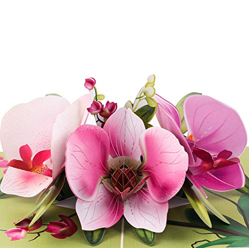 TRUANCE Pop Up Greeting Card Orchid Flower- 3D Cards For Birthday, Anniversary, Mothers Day, Thank...