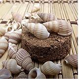 PiniceCore 100PCS Conchas Estrellas de mar caracolas Natural Tornillo decoración de la Pared del Acuario de Bricolaje Concha Paisaje para la decoración del Tanque de Peces