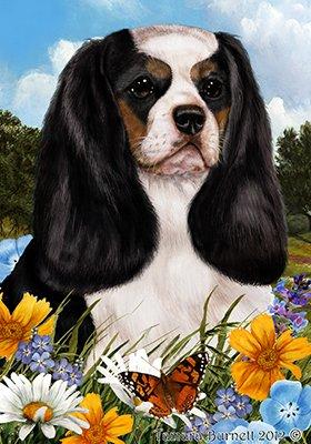 Best of Breed Cavalier King Charles Tri - pavillons de jardin de fleurs d'été