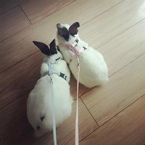 polkar Adjustable Pet Rabbit Walking Harness Leash Lead with Small Bell (Small, Blue+Pink)