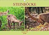 Steinböcke - imposante Tiere (Wandkalender 2020 DIN A3 quer)