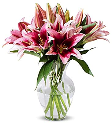 Benchmark Bouquets 8 Stem Stargazer Lily Bunch, With Vase (Fresh Cut Flowers) from Benchmark Bouquets