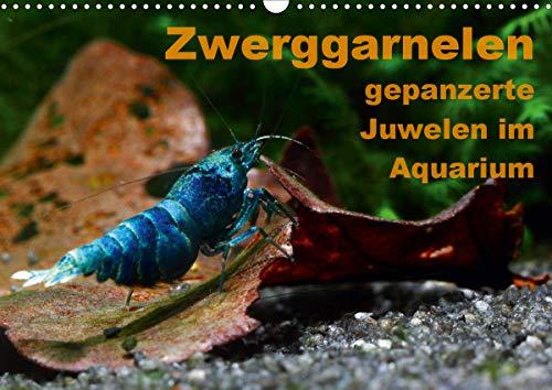 Zwerggarnelen - gepanzerte Juwelen im Aquarium (Wandkalender 2021 DIN A3 quer)