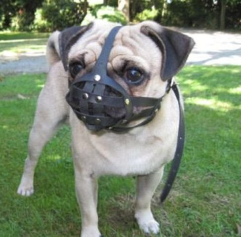 Leather Dog Muzzle for Shih Tzu and Pug Other Flat face Short Snout Dog's (M1, Black)