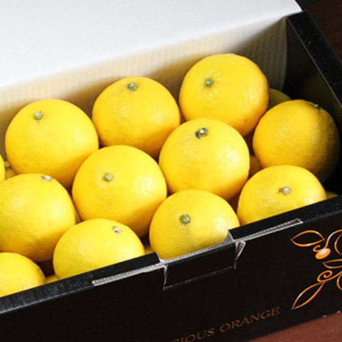 「贈答小夏4」愛媛ニューサマーオレンジ(小夏)贈答用4kg(黒い化粧箱) フルーツ 果物 通販