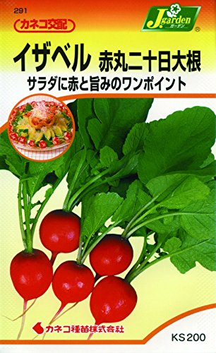 カネコ種苗 野菜タネハイクオリティ291 イザベル 赤丸二十日大根 10袋セット