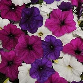 Easy Wave Great Lakes Mix Pelleted Petunia Seeds 25 Pelleted Seeds Email to friends