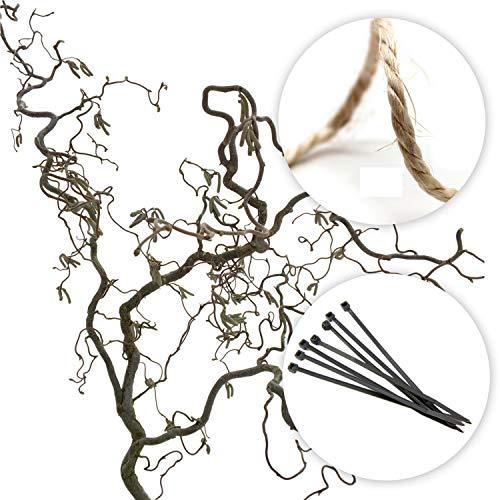 Schön gedrehter, echter Korkenzieher Ast Zweig | Deko Ast ca. 80cm gross zum Aufhängen am Fenster oder für die Vase | Ideal als Osterdeko, Frühlingsdeko oder Weihnachtsdeko | Deko Zweige für Bodenvase