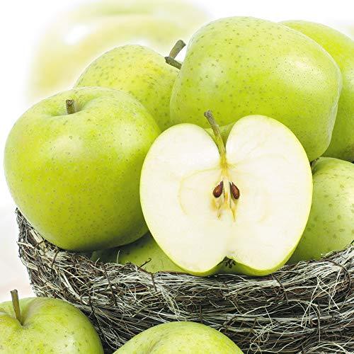 国華園 りんご 山形産 王林 10kg ご家庭用 林檎