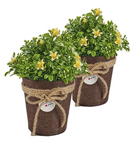 Trendcool x3 Coprivaso per Piante da Interno. Pack 2 Fioriere da Interno. Set di 2 vasi Decorativi per Interni Marron