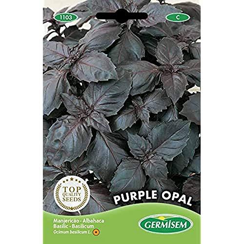 Germisem Purple Opal Semi di Basilico 2 g