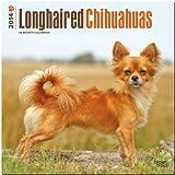 Longhaired Chihuahuas 2014 - Langhaar-Chihuahuas: Original BrownTrout-Kalender [Mehrsprachig] [Kalender]