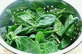 BIO - Spinaci'Geant d'hiver' - semi biologici certificati - 800 semi