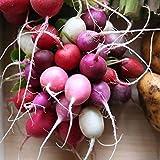 Radish Easter Egg...image