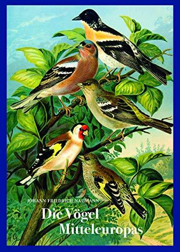 """Johann Friedrich Naumann – Die Vögel Mitteleuropas: Naturgeschichte der Vögel. Vorzugsausgabe mit Fine Art Print """"Waldrapp"""""""