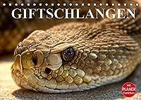 Giftschlangen (Tischkalender 2022 DIN A5 quer): Die Familie der Vipern, Ottern und Giftnattern (Geburtstagskalender, 14 Seiten )