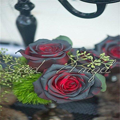 Rosa, plantes grimpantes, Polyantha rose, fleurs chinoises Graines, rosiers grimpants Seeds, 200 pcs / sac
