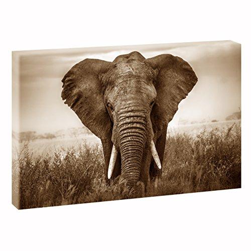 Querfarben Elefant   V1720319   Bilder auf Leinwand   Wandbild im XXL Format   Kunstdruck in 120 cm x 80 cm   Bild Afrika Wilde Tiere (Sepia)