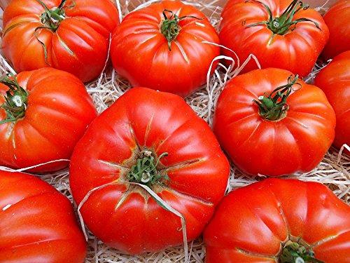 10 Samen RAF Tomate Sorte Super Marmande, old spanish heirloom tomato, aus Andalusien, Südspanien