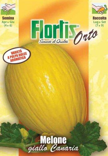 Honigmelone Giallo Canaria 3