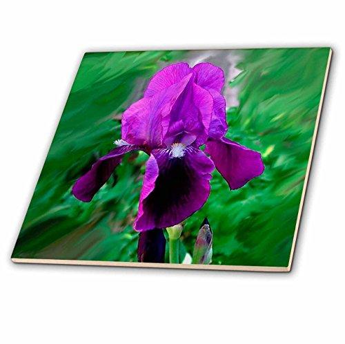 3dRose CT 1235_ 2lila Iris Keramik Fliesen, 6