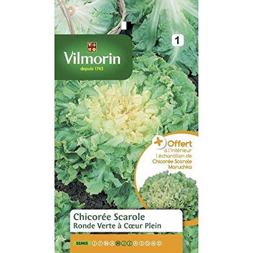 Vilmorin Sachet graines Chicorée Scarole Ronde Verte à Coeur Plein