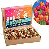 12 Tulips from Amsterdam | Gift Box | Unique...