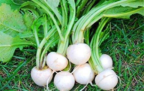 Arc-en-Betterave Graine Cylindra comestibles Légumes biologiques, plantes en pot de racine de betterave Bonsai Seed plantation Saison 50 Pcs 5