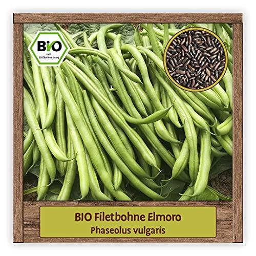BIO Bohnen Samen Buschbohne Saatgut Filetbohne Gemüsesamen mit grünen Hülsen & schönen schwarzen Kernen