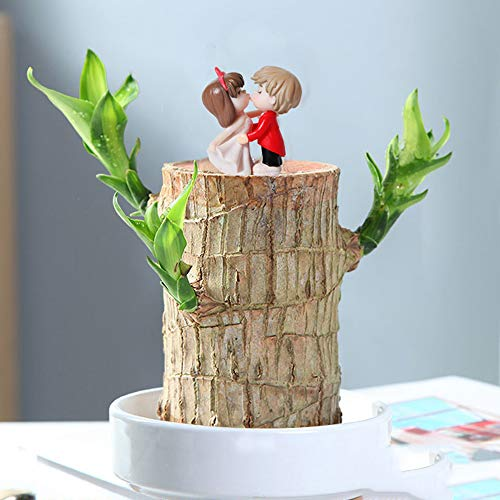 Brazil Wood, Hydroponic Plant Indoor Potted Plant, Lucky Wood Groot, Plant Potted Plant, Mini Cute Desktop Greening, Creative And Birthday Gifts,5CM