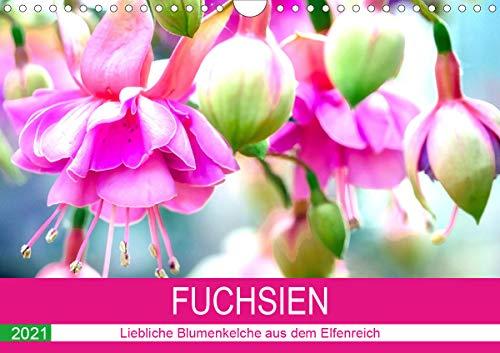 Fuchsien. Liebliche Blumenkelche aus dem Elfenreich (Wandkalender 2021 DIN A4 quer)
