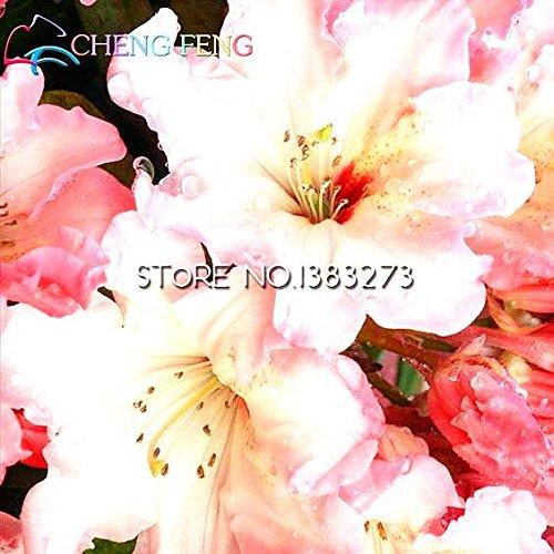 50 Pcs / sac rares Graines Bonsai Azalea Diy Maison & Jardin Graines Plantes Chine comestibles Lily décoration florale Sementes Balcon Planteur