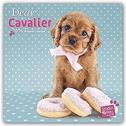Dear Cavalier 2016 - Cavalier King Charles Spaniel. 18-Monatskalender mit freier DogDays-App: Original Myrna-Kalender[Amazon]