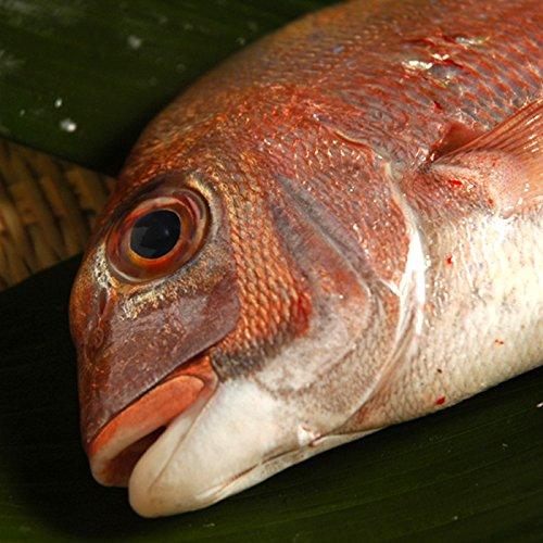 鯛 (天然) 瀬戸内海産 3kg ( レシピ付き ) (水洗い(ウロコ、内臓取り))