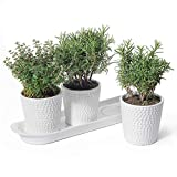 White Ceramic Herb Planter Pots - POTEY 056401 3.8 Inch Modern Vintage-Style Hobnail Textured Planters with Drainage Hole for Indoor Plants Succulent, 3 Pots & 1 Saucer (Plants Not Included)