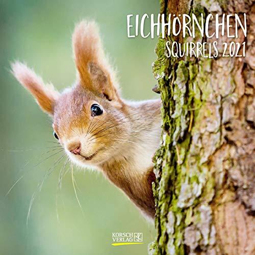 Eichhörnchen 2021: Broschürenkalender mit Ferienterminen. Format: 30 x 30 cm