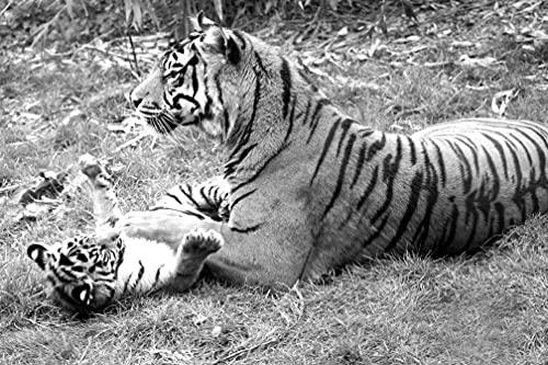 BILD PAPEL MOON - Papel pintado fotográfico (fieltro, impresión digital, incluye pegamento), diseño de tigre, color blanco y negro