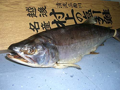 [暮れのご挨拶]塩引き鮭(一本物)5kg台 越後村上の名産品です。贈り物に大変喜ばれます