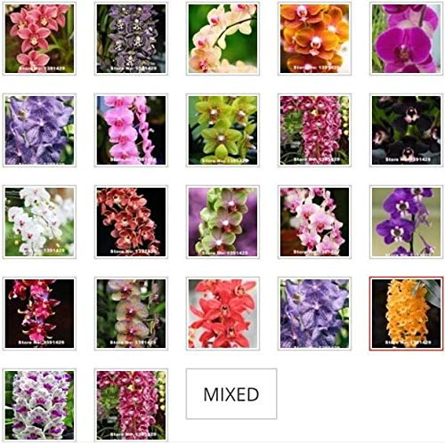 50Pcs Mixed Colors Phalaenopsis Seeds_Flower Bonsai Balcony Orchid Seeds