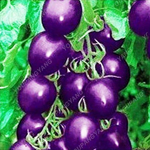 100pcs / sac rare graines de poivron rouge tomate Graines Bonsai légumes sains Heirloom biologiques et les graines de fruits pour jardin gris clair