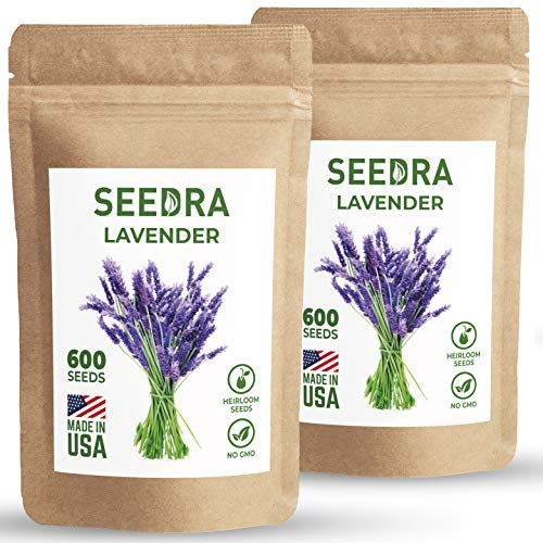 SEEDRA English Lavender Seeds for Indoor and Outdoor Planting - 1200 Seeds/1000mg - GMO-Free and Heirloom Seeds - Germination Above 90% - 2 Pack