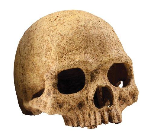 ExoTerraCueva Cráneo de Primate