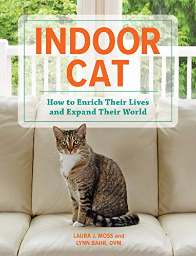 Indoor Cat: How to Enrich Their Lives and Expand Their World