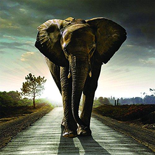 Up Close Lentikular-Grußkarte, blanko, 3D-Motiv Elefant Stomp