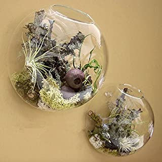 "Pack of 2 Larger Wall Bubble Terrariums Glass Bowl 6"" Wall Mounted Glass Vase for Dried Flowers Tillandsia Air Plants Holders Wall Hanging Succulents Planters"