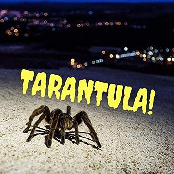 Tarantula!