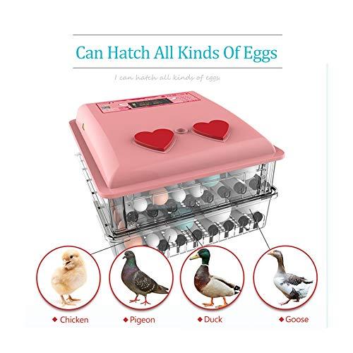DGYAXIN Incubadora, Incubadora Huevos Gallina, Incubadora Huevo- 36 Huevos, Fuente de Alimentación Dual Multifuncional Digital Inteligente Incubadora, Pollos Patos Aves Pavos Codornices