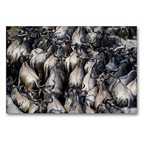 CALVENDO Premium Textil-Leinwand 90 x 60 cm Quer-Format Emotionale Momente: Die große Gnuwanderung, Leinwanddruck von Ingo Gerlach