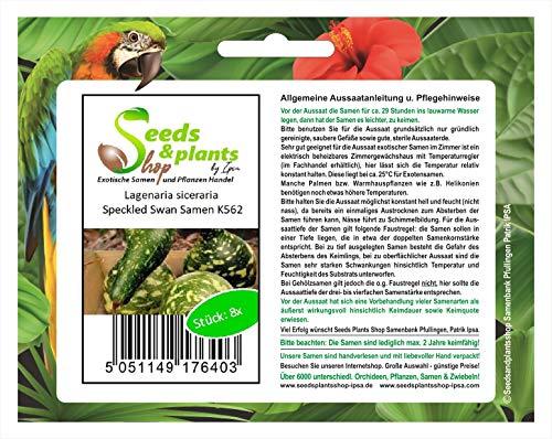 Stk - 8x Lagenaria siceraria Speckled Swan Kürbis - Samen Zierkürbis K562 - Seeds Plants Shop Samenbank Pfullingen Patrik Ipsa